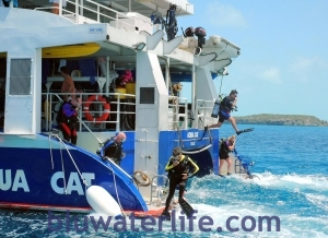AQUA CAT liveaboard diving