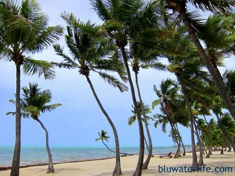 Moorings Village Islamorada private beach
