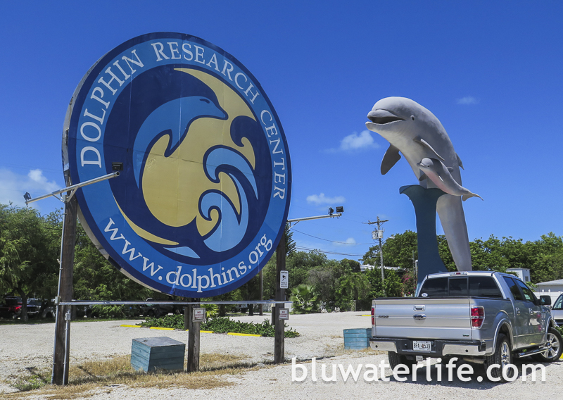 dolphin research center ~ #flkeys