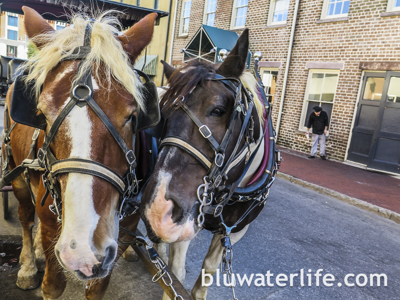 Savannah carriage tours ~