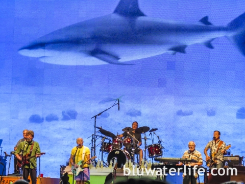 Jimmy Buffett Concert